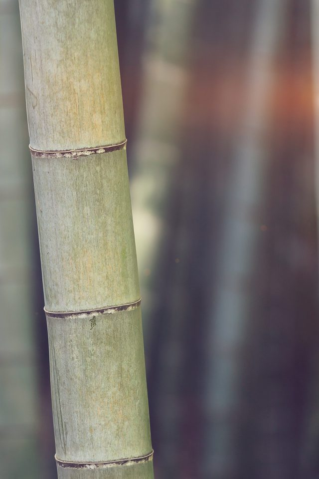 Bamboo Nature Tree Blue Android wallpaper
