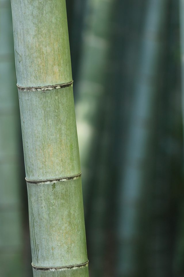 Bamboo Nature Tree Green Android wallpaper
