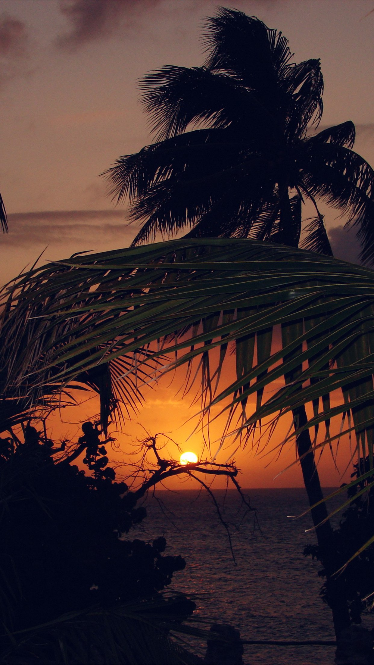 Beach Sunset Sea Tree Nature Holiday Android wallpaper