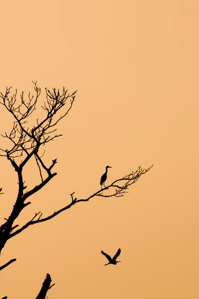 Bird Sunset Tree Nature Minimal Android wallpaper