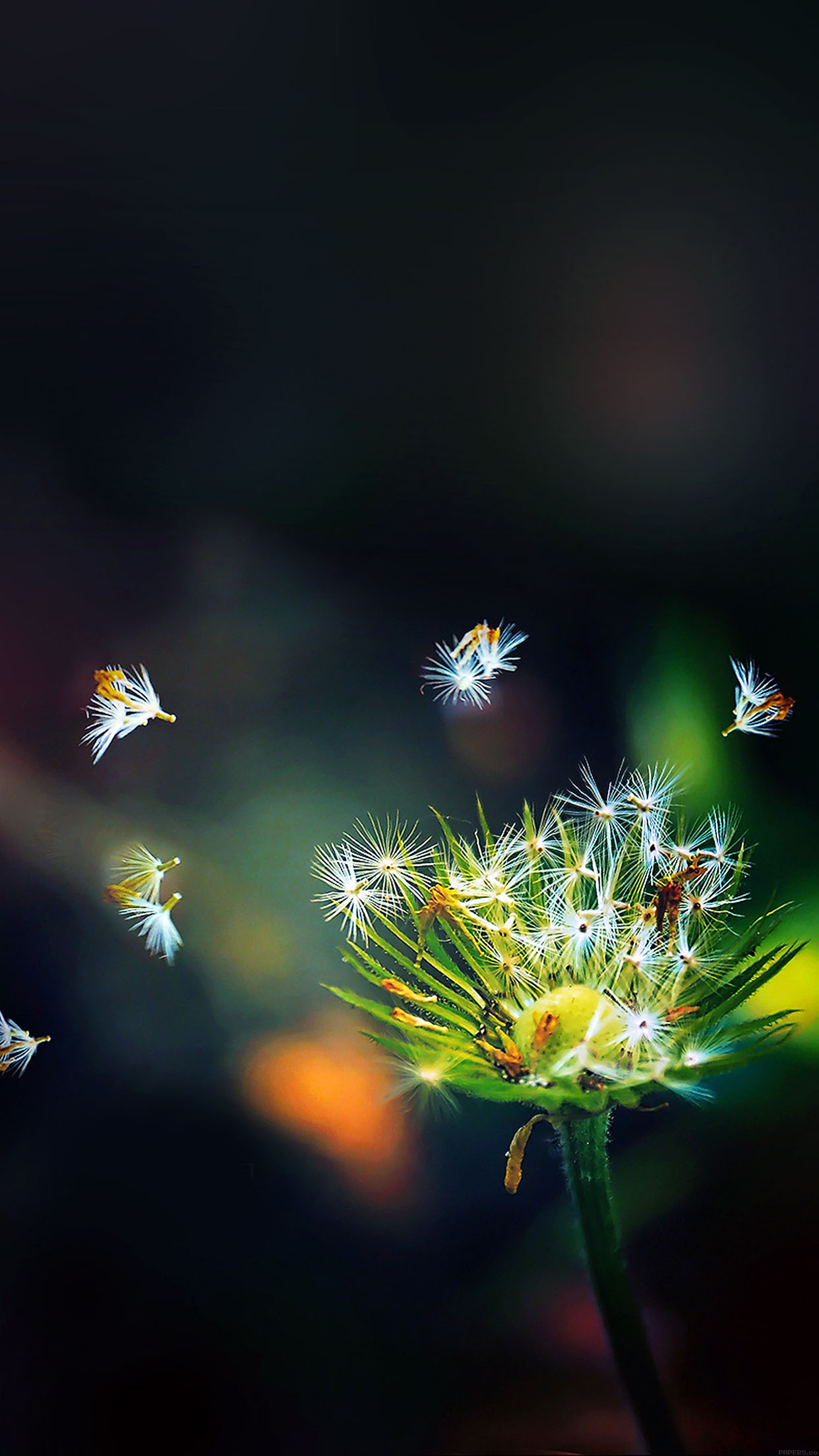 Blow Dandelion Flower Nature Android wallpaper