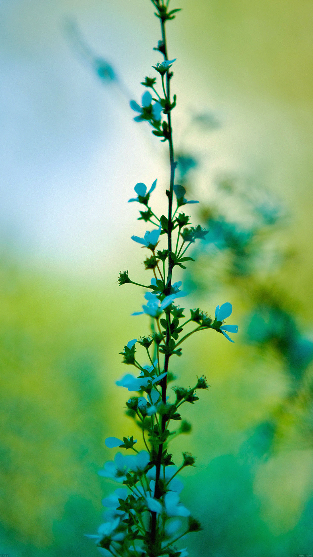 Blue Flower Day Bokeh Nature Android wallpaper