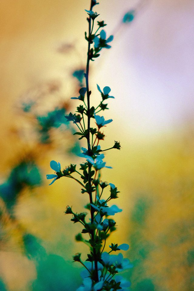 Blue Flower Sunny Bright Day Bokeh Nature Android wallpaper