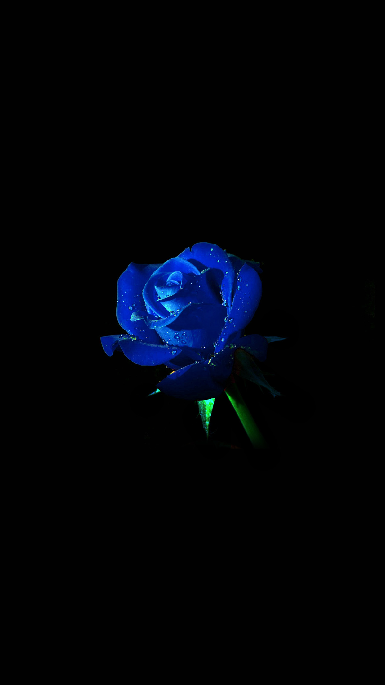 Blue rose dark flower nature android wallpaper android - Dark blue wallpaper hd for android ...