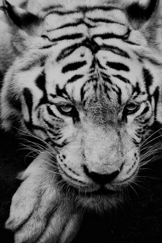Bw Dark Tiger Animal Android wallpaper
