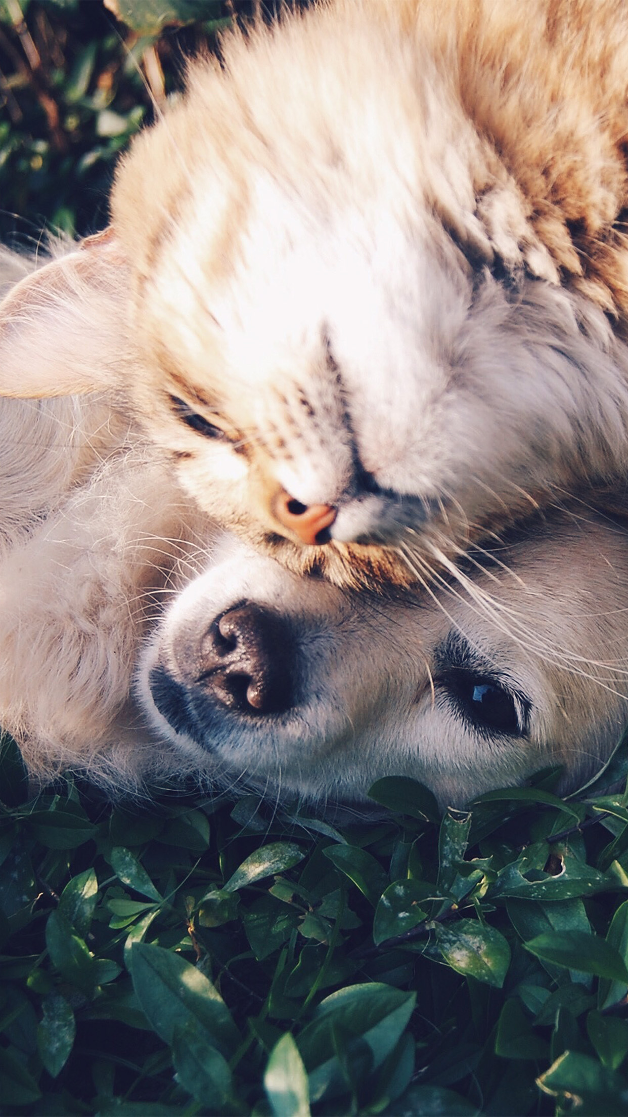 Cat And Dog Animal Love Nature Pure Android wallpaper