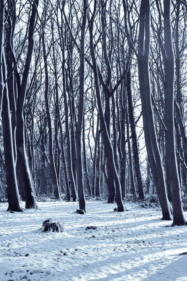 Cold Winter Forest Snow Nature Mountain Android wallpaper