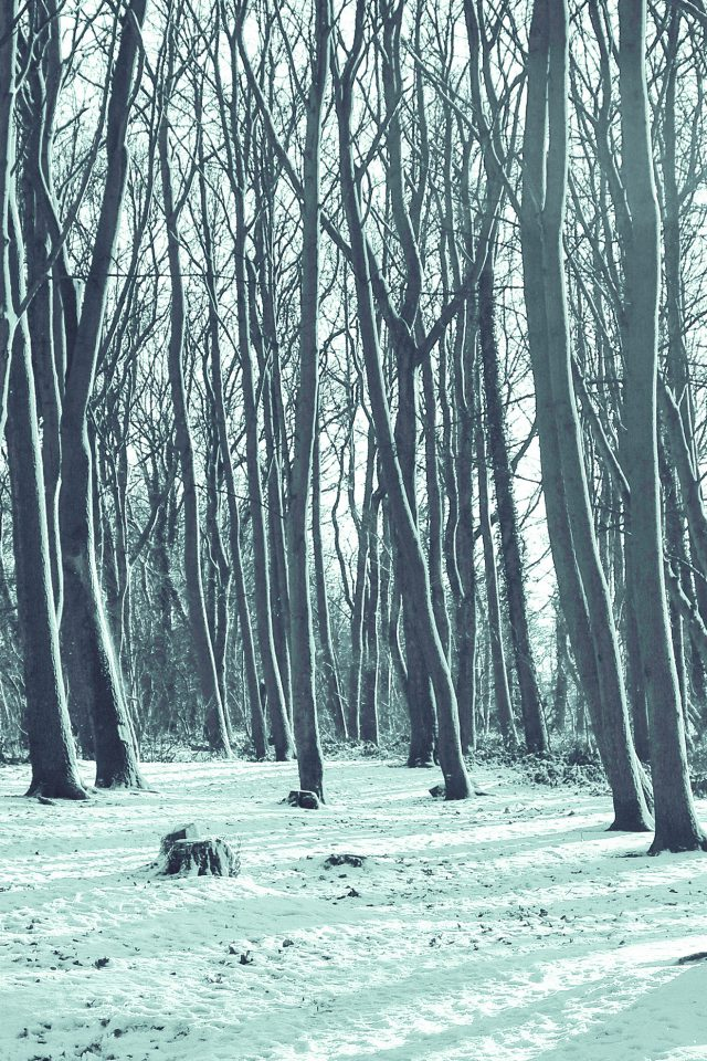 Cold Winter Forest Snow Nature Mountain Blue Android wallpaper