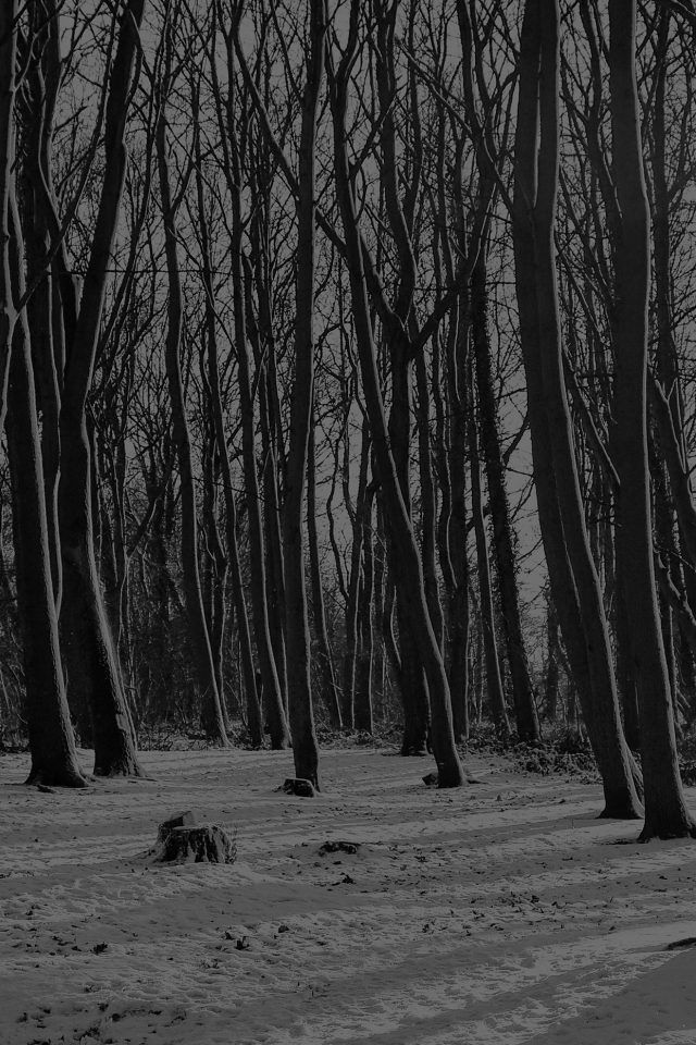 Cold Winter Forest Snow Nature Mountain Dark Bw Android wallpaper