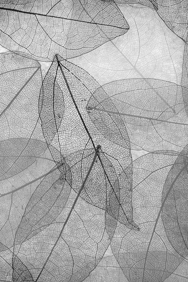 Dark Bw Leaf Art Fall Nature Pattern Android wallpaper