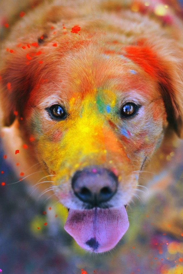 Dog Smile Fall Leaves Art Nature Android wallpaper