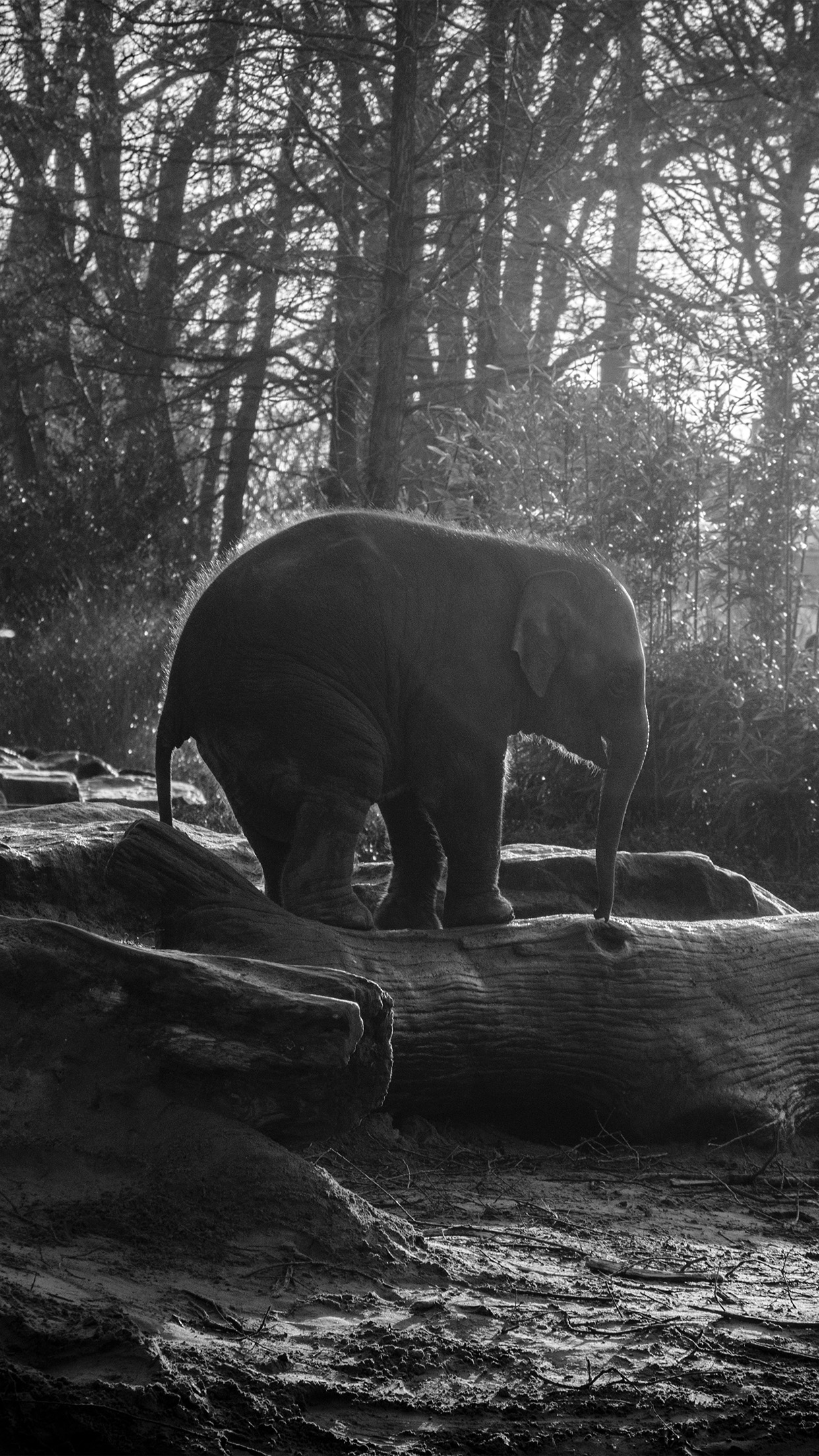 Elephant Dark Bw Animal Cute Nature Baby Android wallpaper