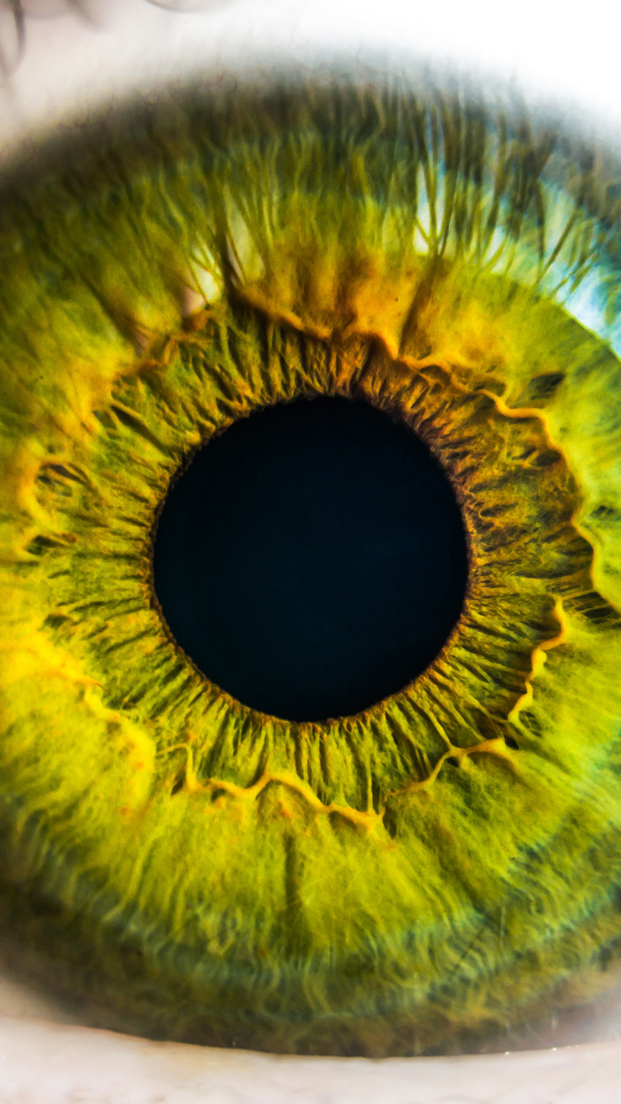 Eye Human Nature Pupil Body Science Android wallpaper