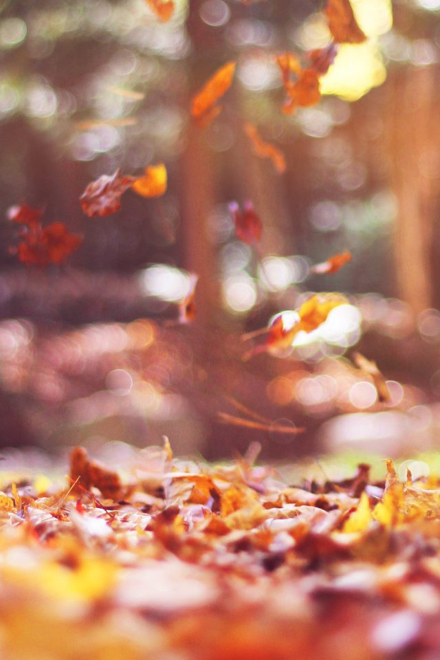 Fall Leaves Nature Tree Year Sad Flare Android wallpaper
