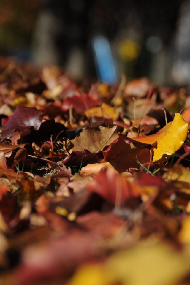 Fall Mountain Leaf Brown Bokeh Nature Android wallpaper