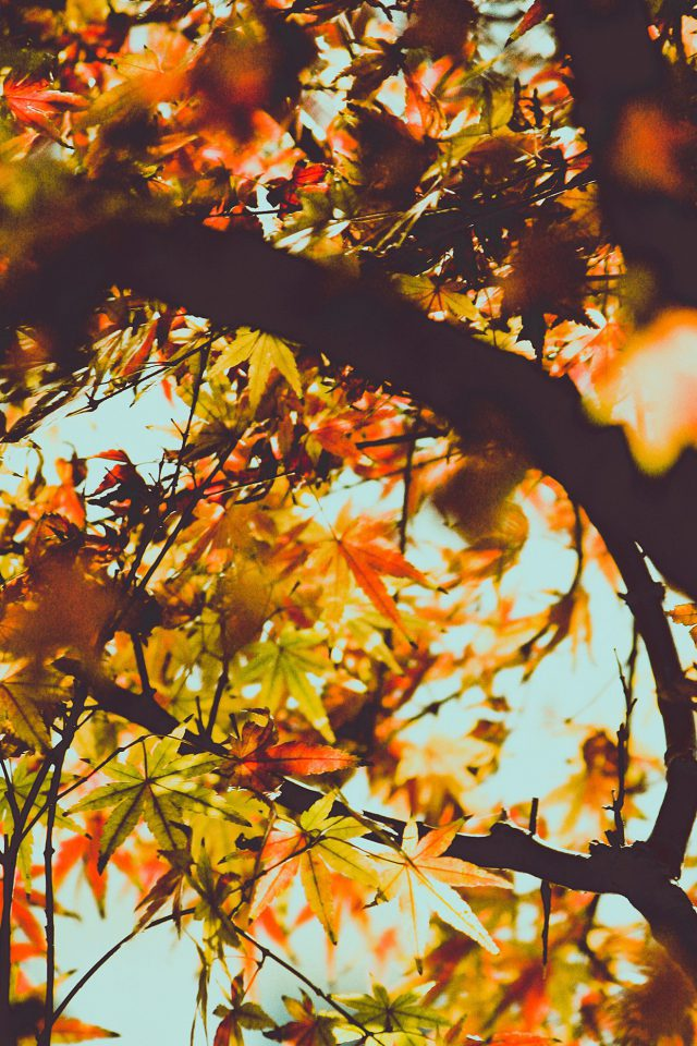 Fall Tree Leaf Autumn Nature Mountain Android wallpaper