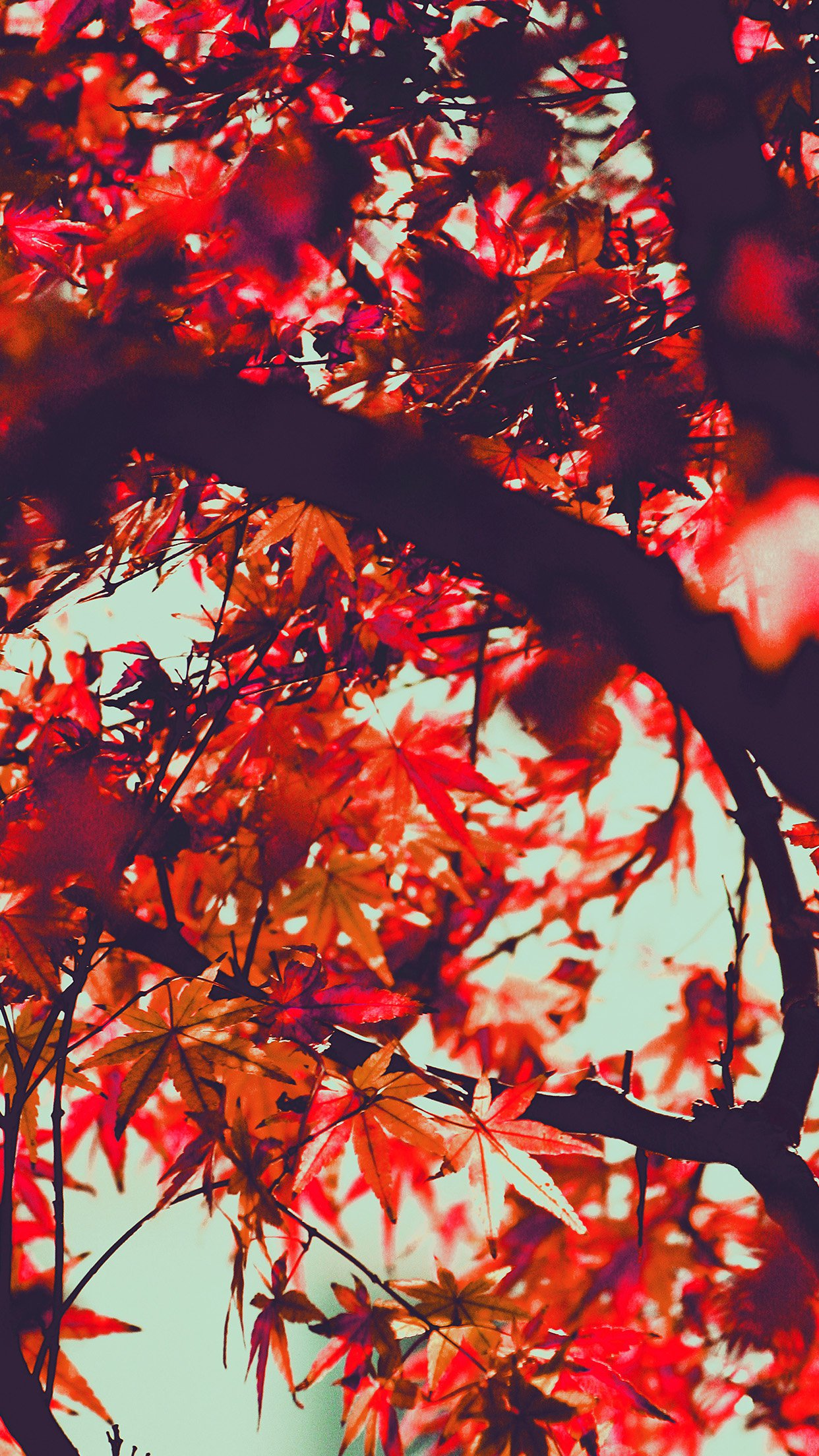 Fall Tree Leaf Autumn Nature Mountain Red Android wallpaper