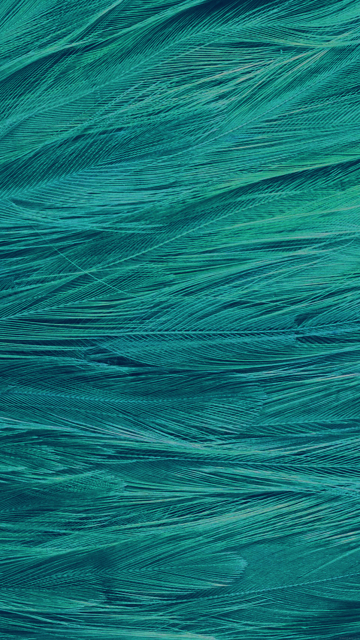 Feather Blue Bird Pattern Android wallpaper