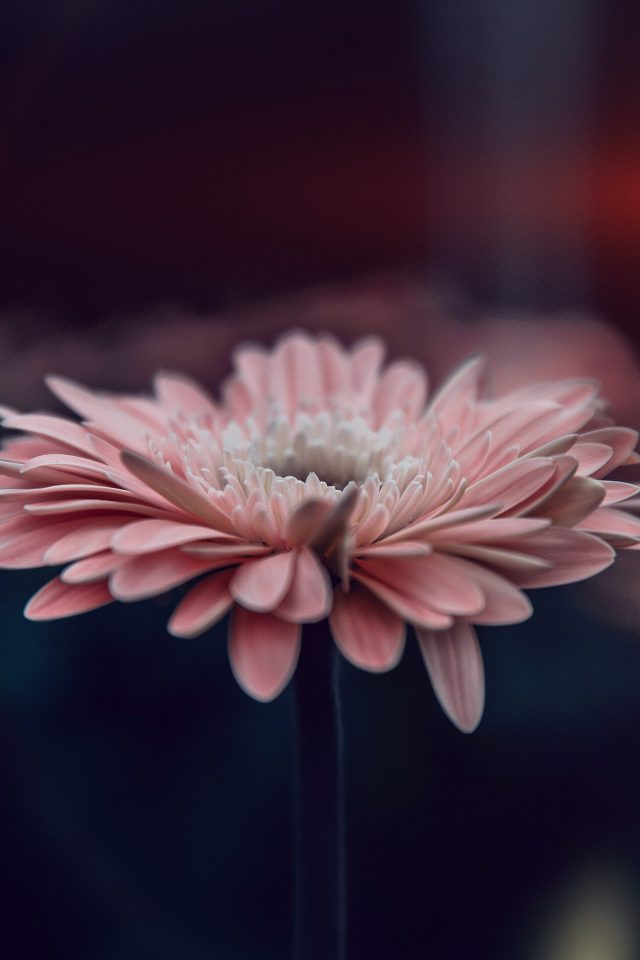 Flower Blue Calm Nature Bokeh Android wallpaper
