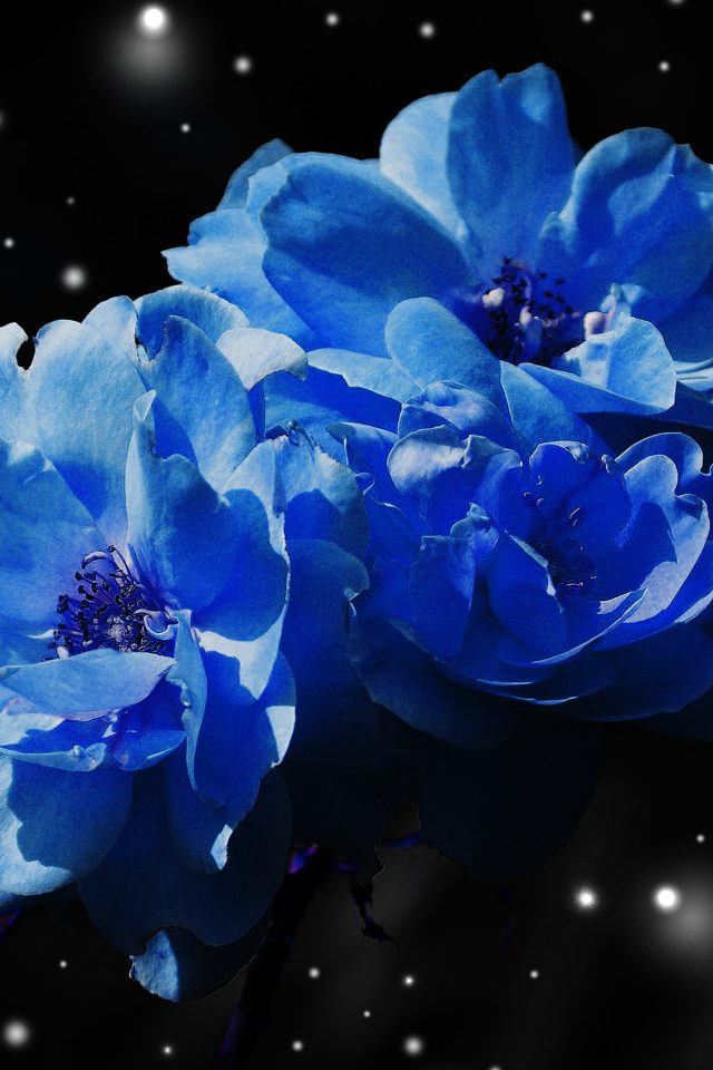 Flower Blue Snow Nature Art Android wallpaper