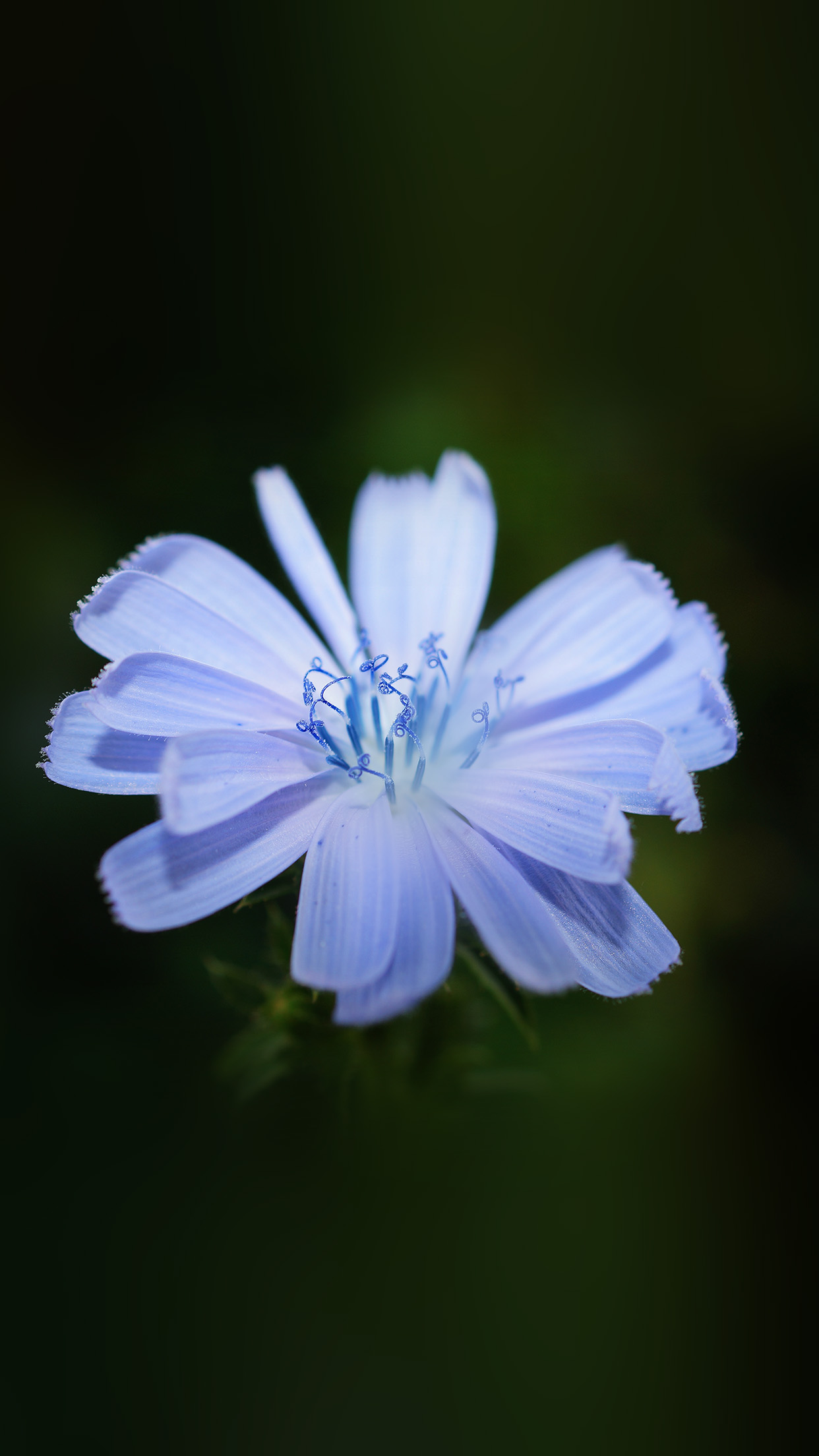 Flower Blue Spring New Life Nature Dark Android wallpaper