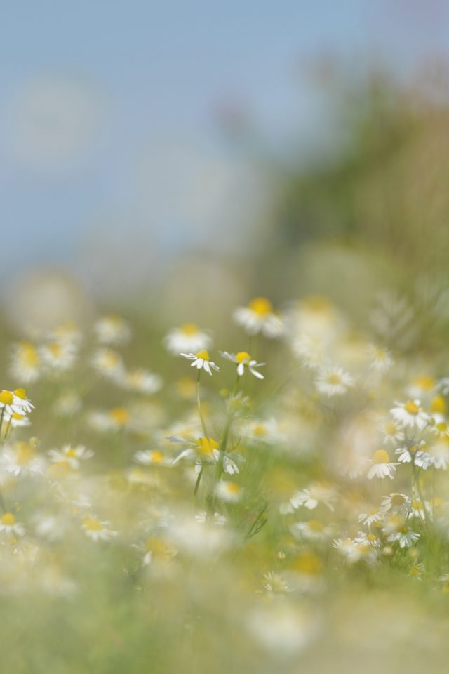 Flower Bokeh White Spring Nature Android wallpaper