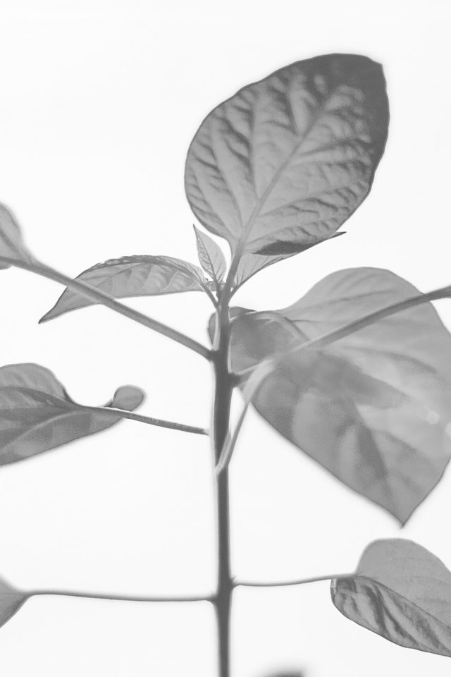 Flower Leaf Simple Minimal Nature Bw Android wallpaper