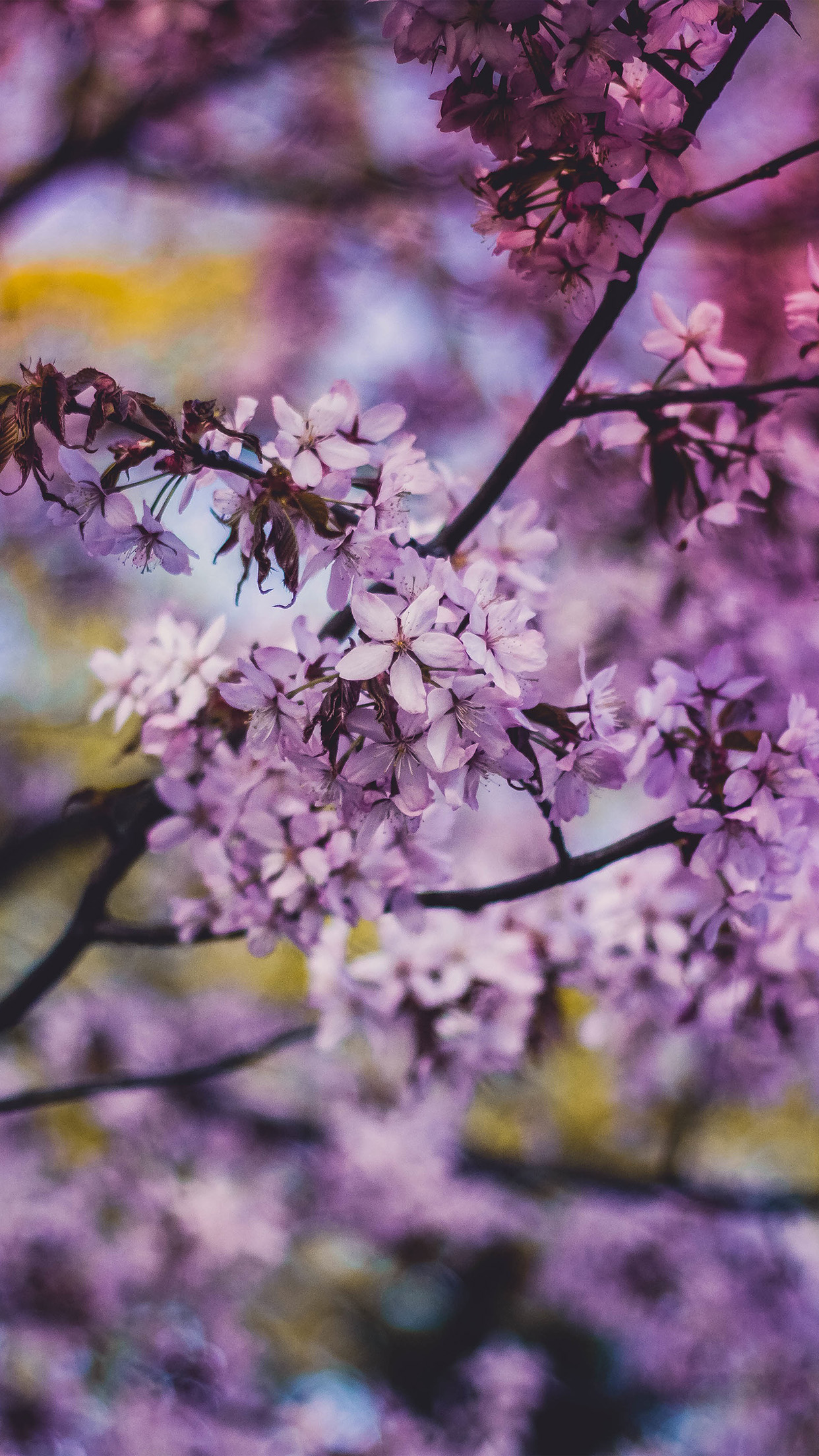 Flower Pink Blue Nature Bokeh Tree Sprin Android wallpaper