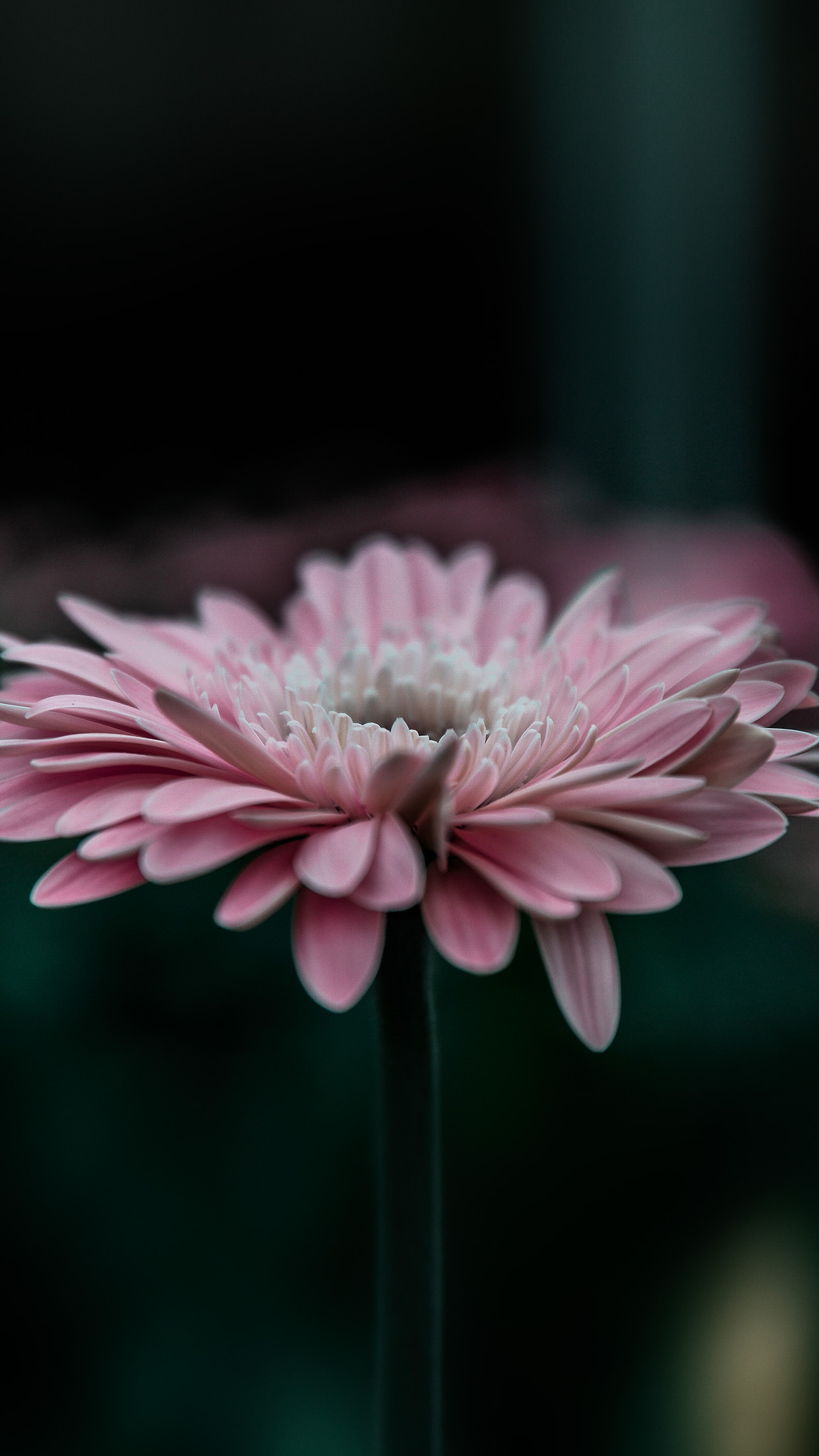 Flower Pink Calm Nature Bokeh Android wallpaper