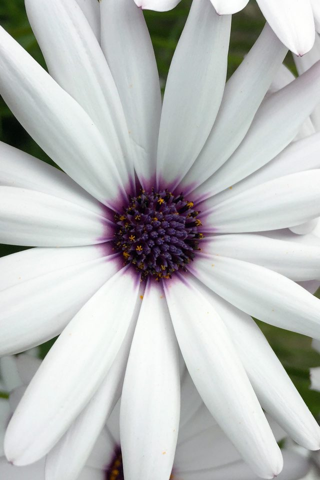 Flower Purple White Spring Nature Android wallpaper