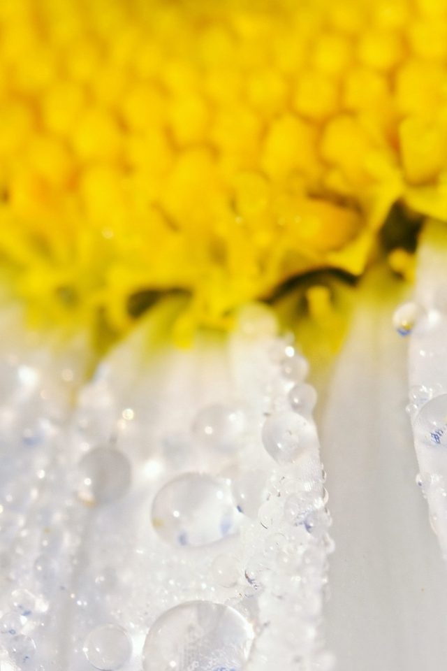 Flower Raindrop Yellow Nature Android wallpaper