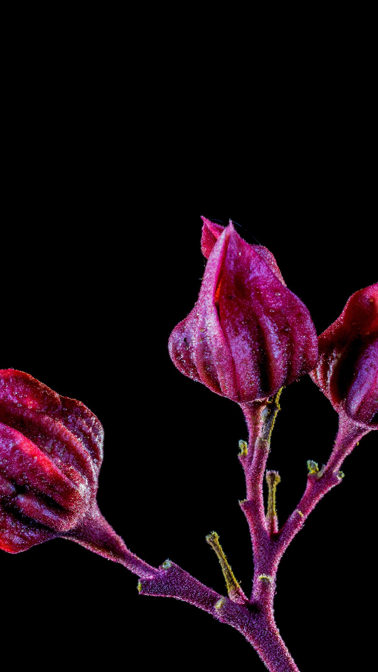 Flower Red Dark Art Nature Android wallpaper