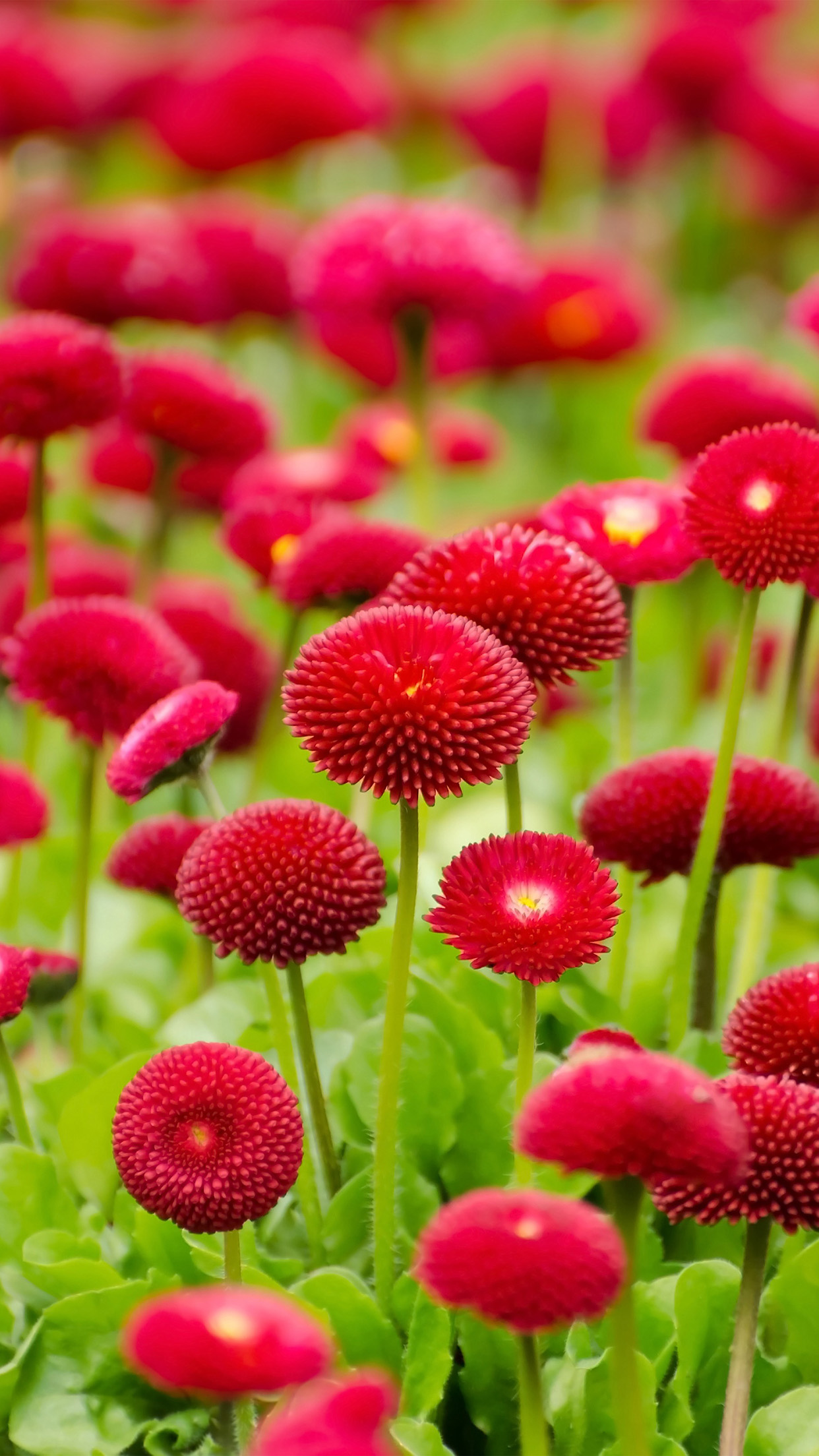 Flower Red Green Spring Bokeh Nature Android wallpaper