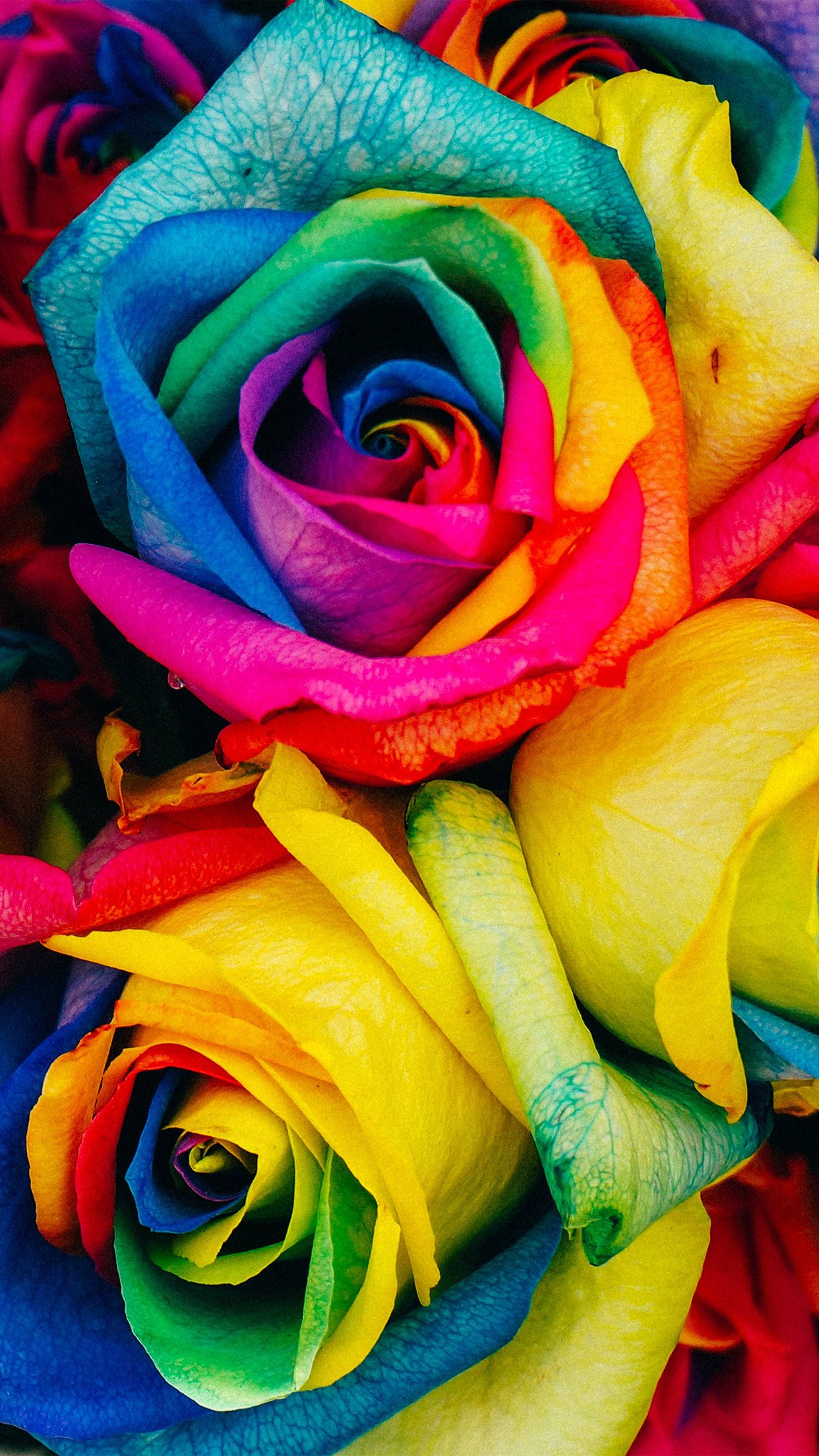 Flower Rose Color Rainbow Art Nature Android Wallpaper Android