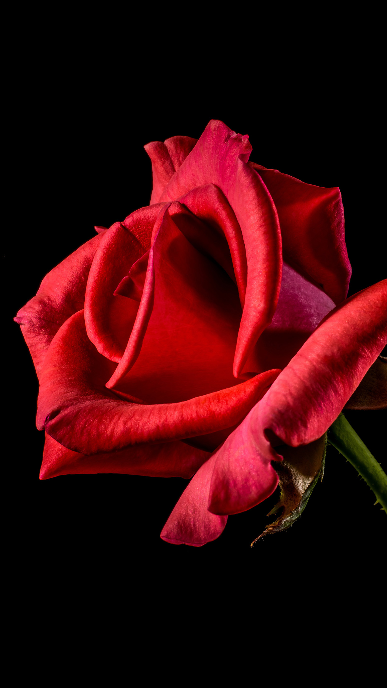 Flower Rose Red Dark Beautiful Best Nature Android Wallpaper