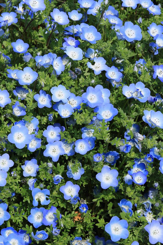 Flower Spring Blue Nature Android wallpaper