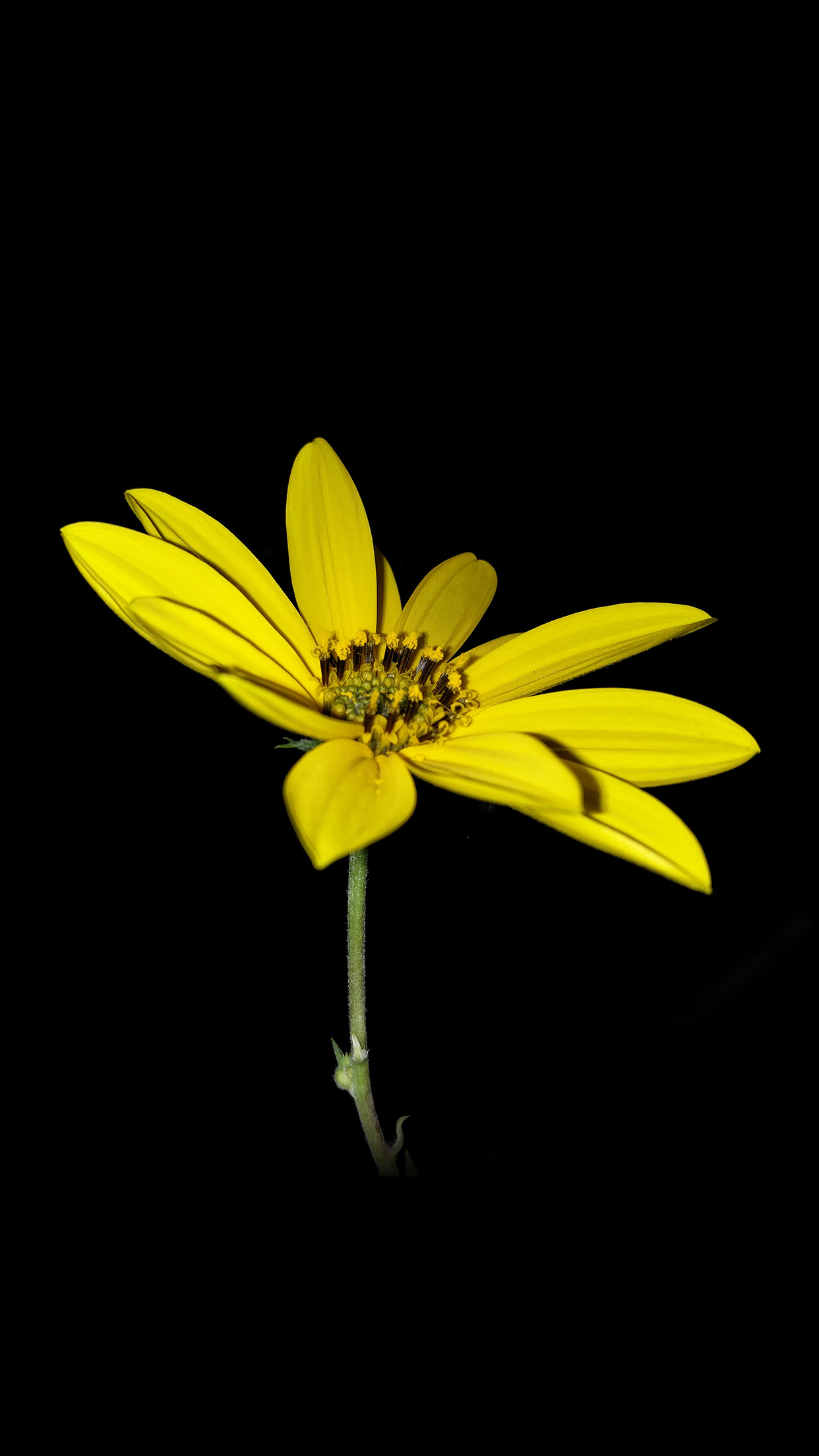 Flower Yellow Nature Art Dark Minimal Simple Android wallpaper