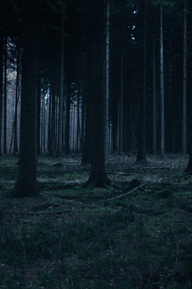 Forest Dark Night Trees Nature Android wallpaper