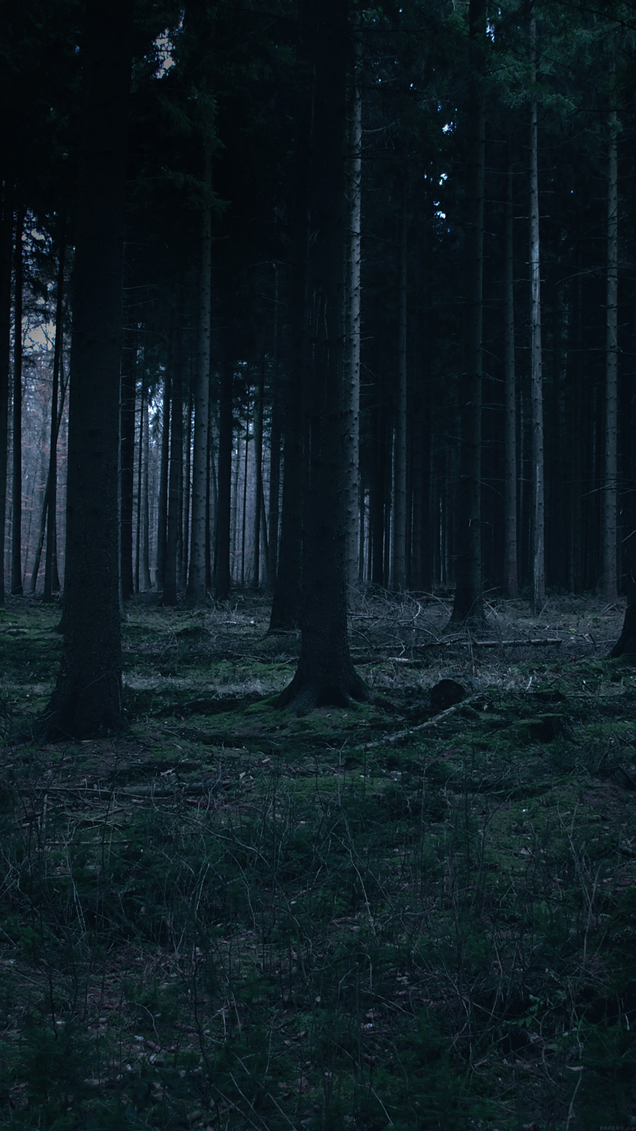Forest dark night trees nature android wallpaper android hd forest dark night trees nature android wallpaper android hd wallpapers voltagebd Gallery