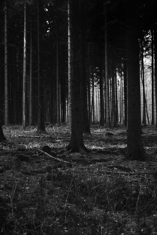 Forest Dark Scary Night Trees Nature Android wallpaper