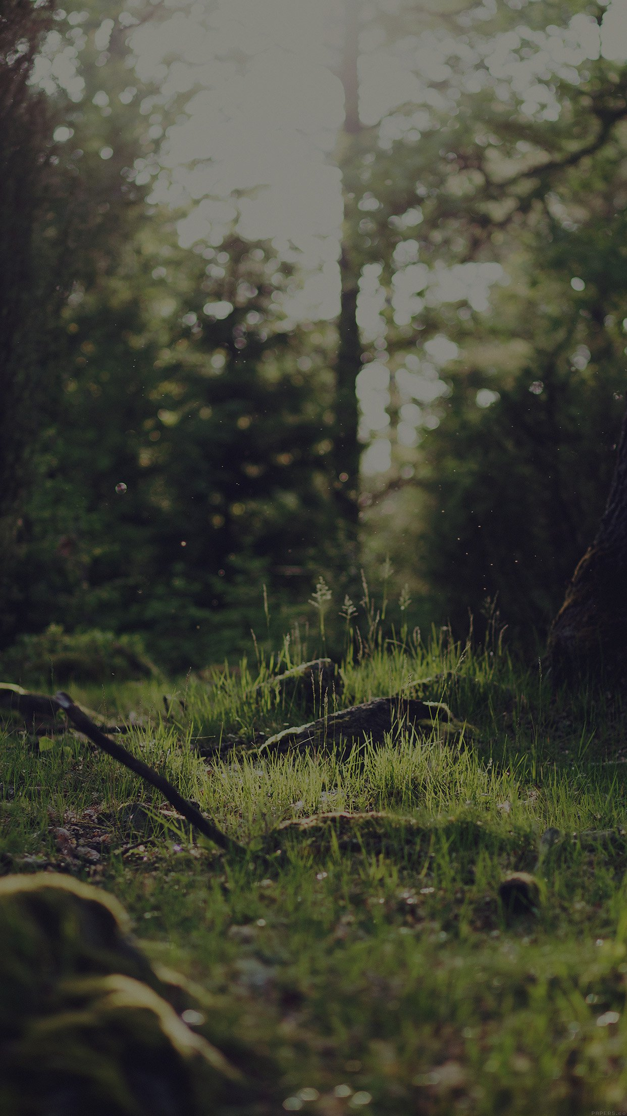 Forest Green Nature Tree Dark Jonas Nilsson Lee Android wallpaper