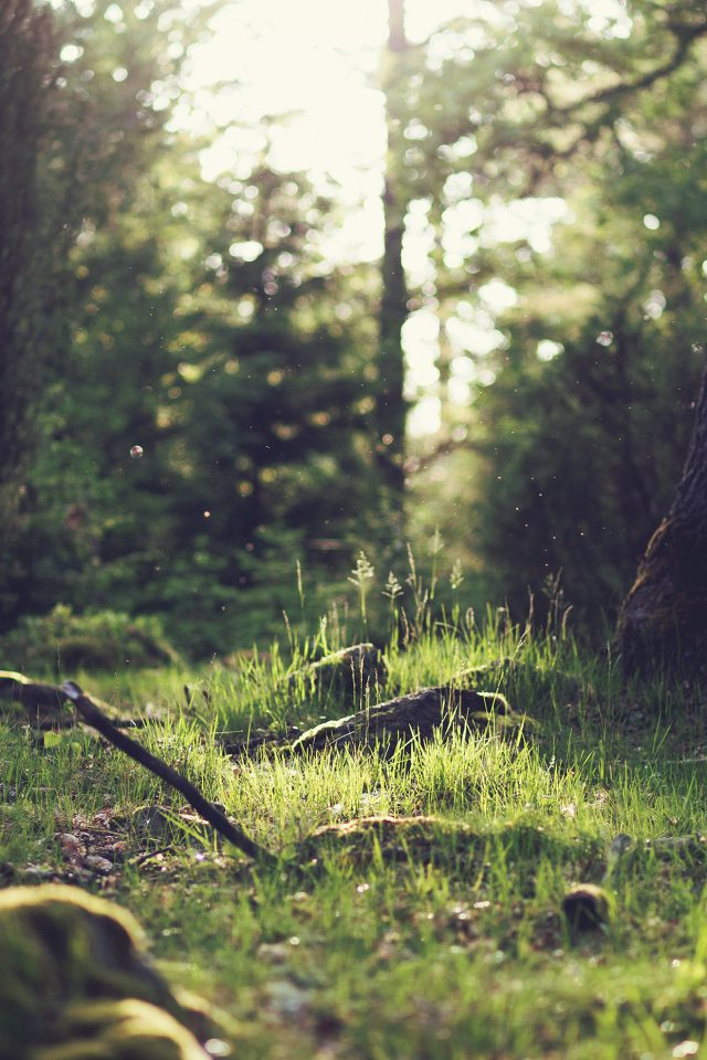 Forest Green Nature Tree Jonas Nilsson Lee Android wallpaper