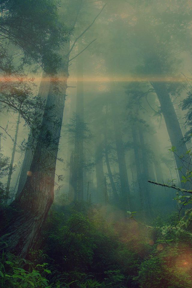 Forest Wood Fog Flare Nature Green Android wallpaper