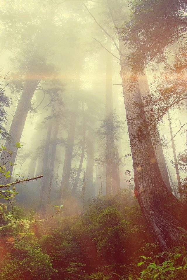 Forest Wood Fog Flare Red Nature Green Android wallpaper