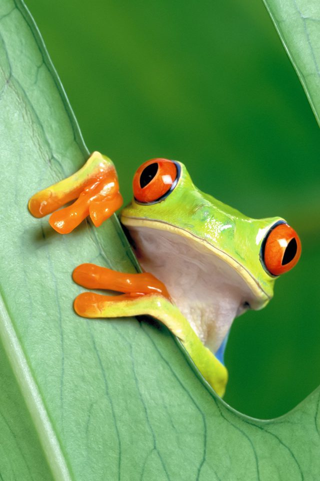 Frog Leaf Nature Android wallpaper