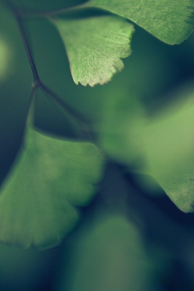 Good Luck Blue Clovers Leaf Nature Android wallpaper