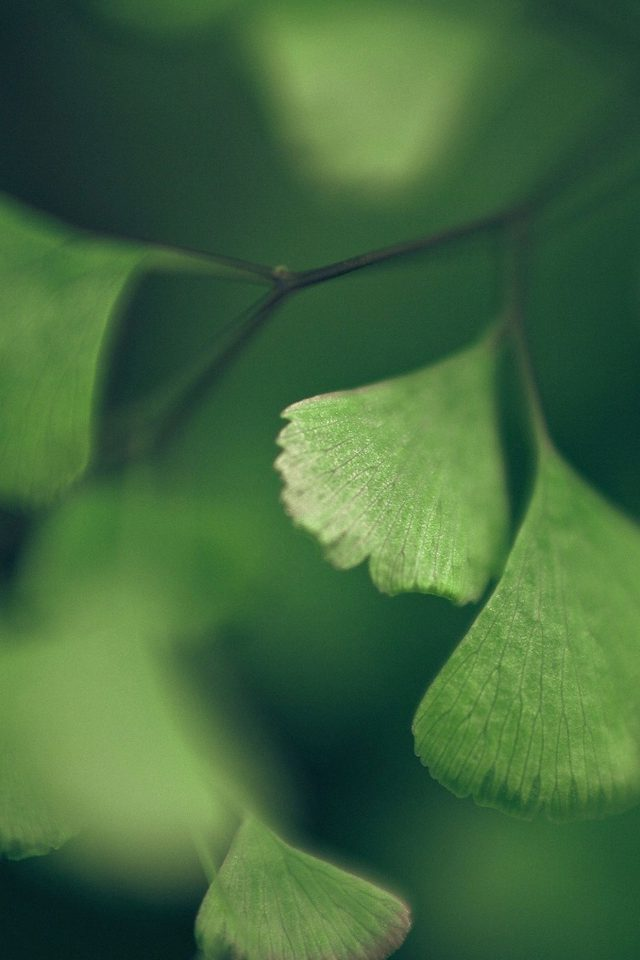 Good Luck Clovers Leaf Nature Android wallpaper