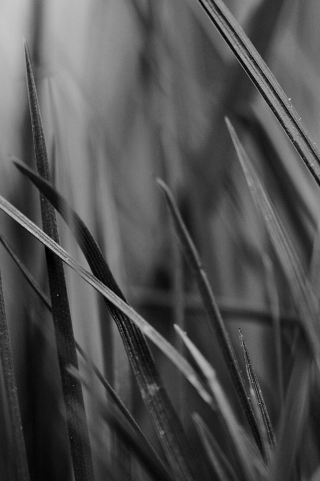 Grass Dark Bw World Garden Leaf Nature Android wallpaper