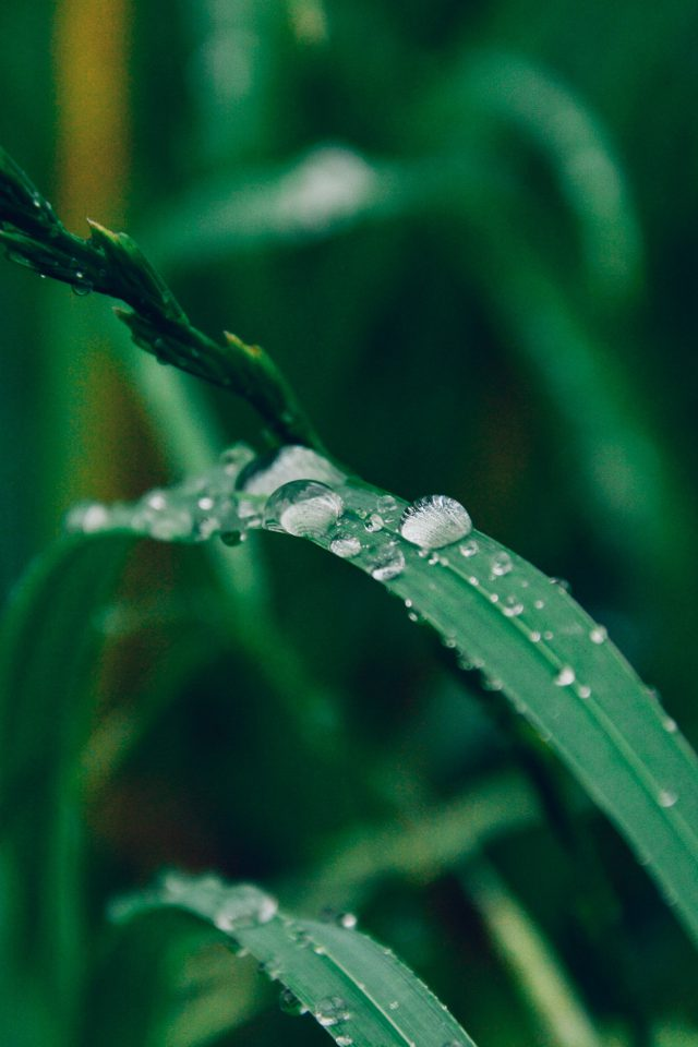 Grass Drop Water Rain Nature Forest Android wallpaper