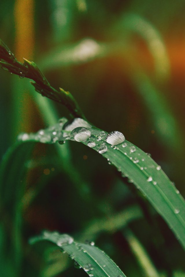 Grass Drop Water Rain Nature Forest Flare Android wallpaper